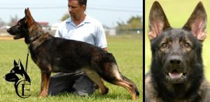 Dasko Canine Extreme